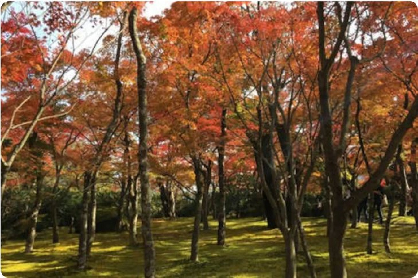 Hakone Art Museum in the autumn