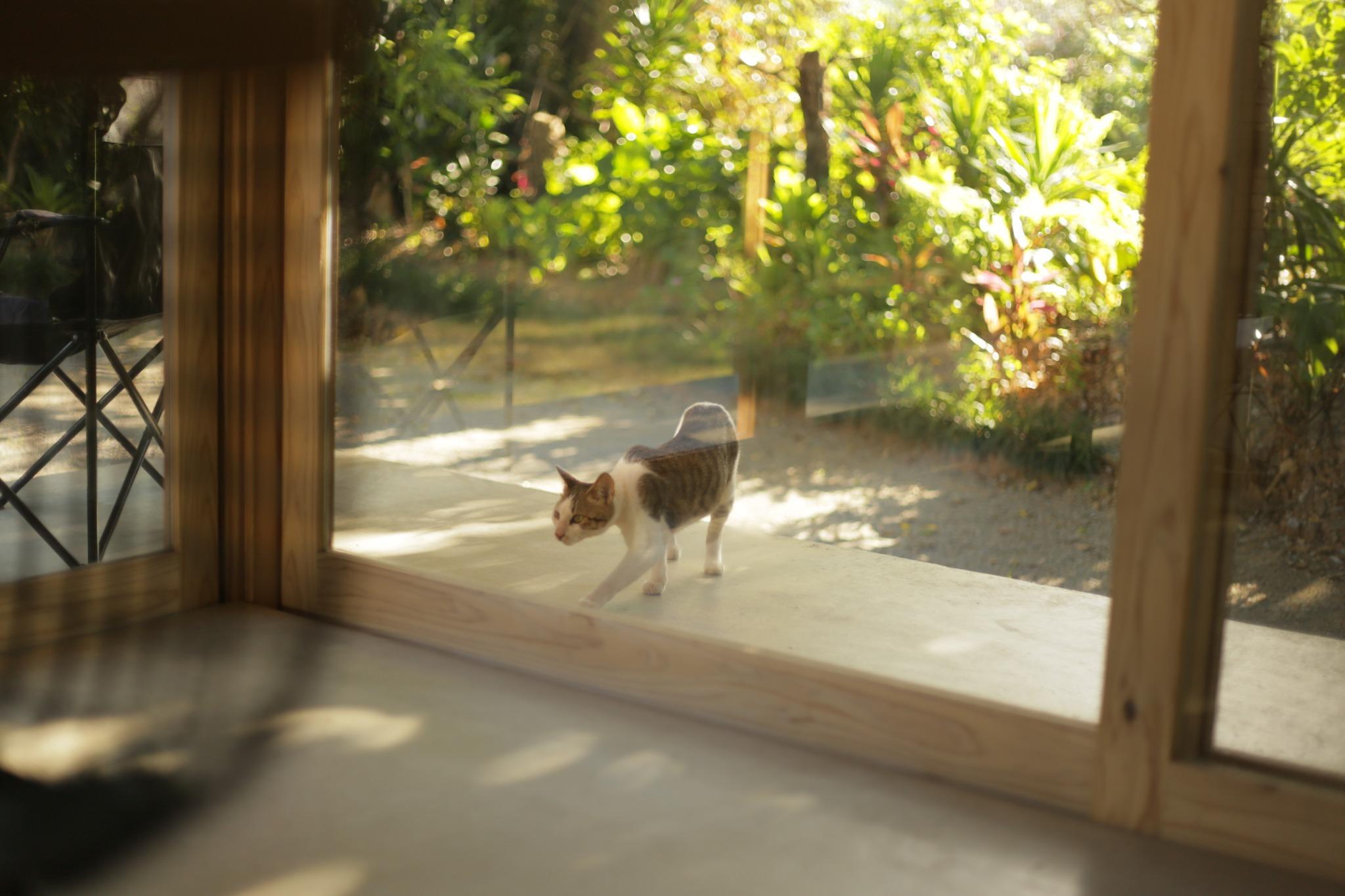 Cat walk around sometimes