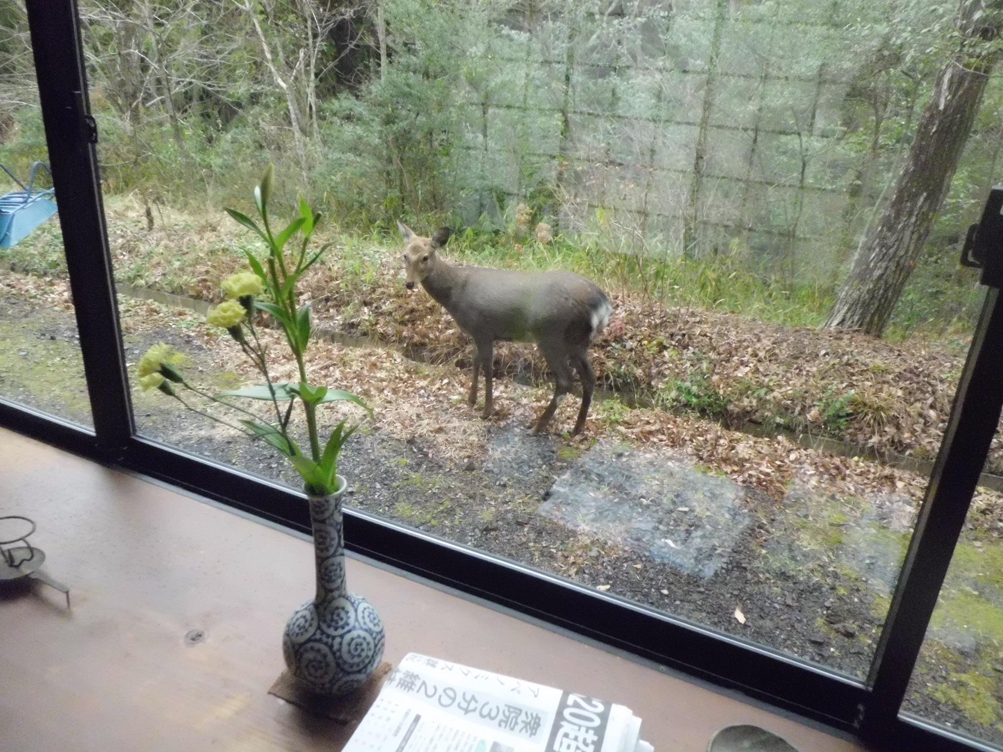庭へ鹿が遊びに来ました
