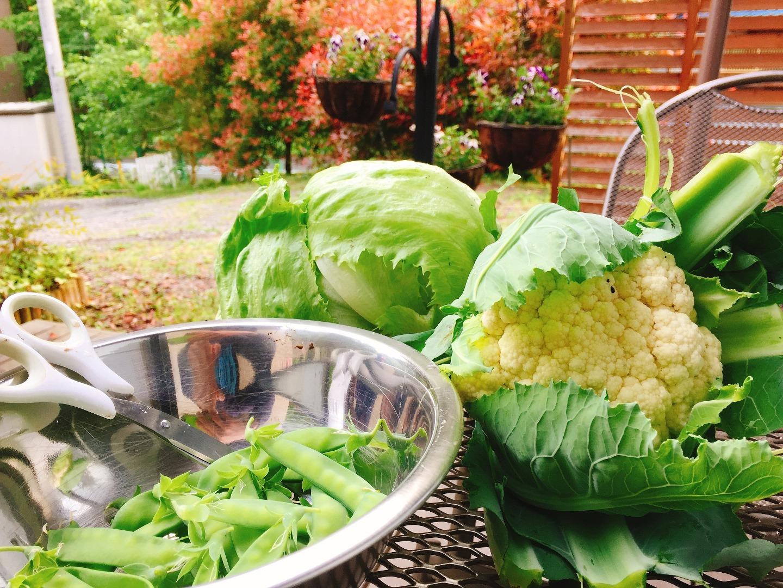 家庭菜園で取れた野菜
