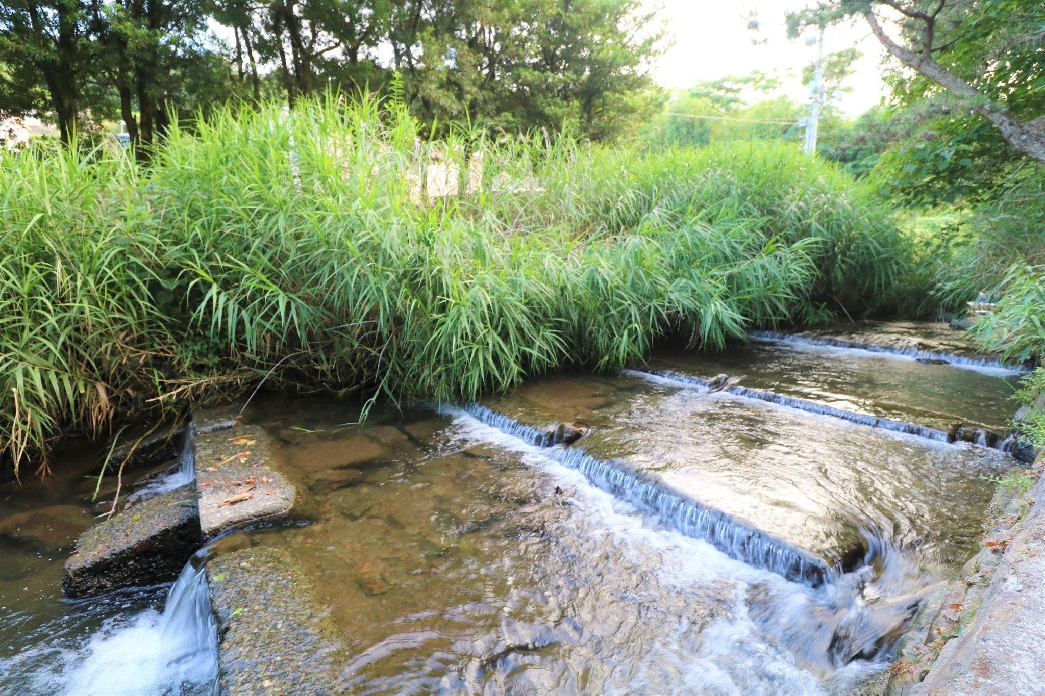 伊豆の川が流れるタイニーハウス
