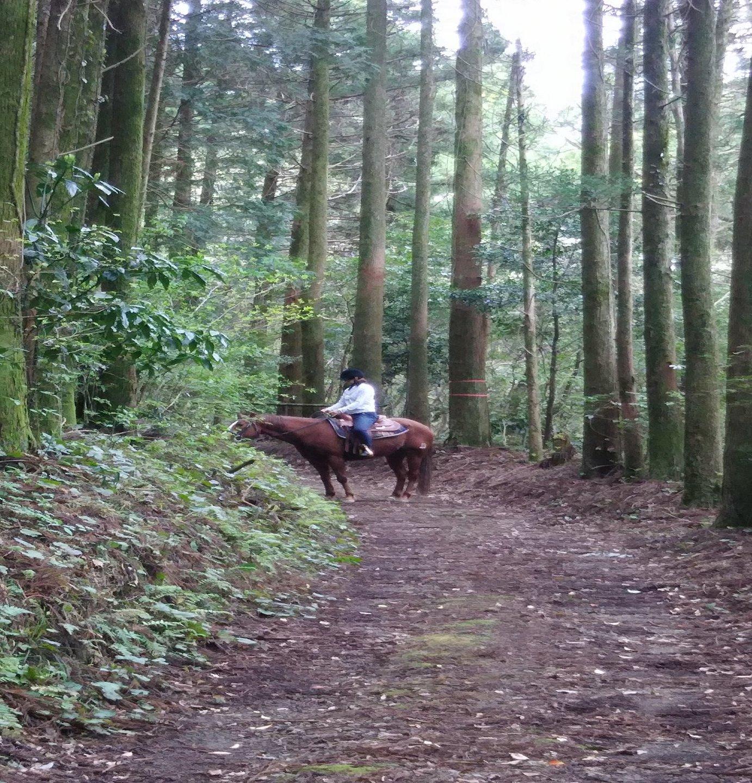 山の中で乗馬ハイク