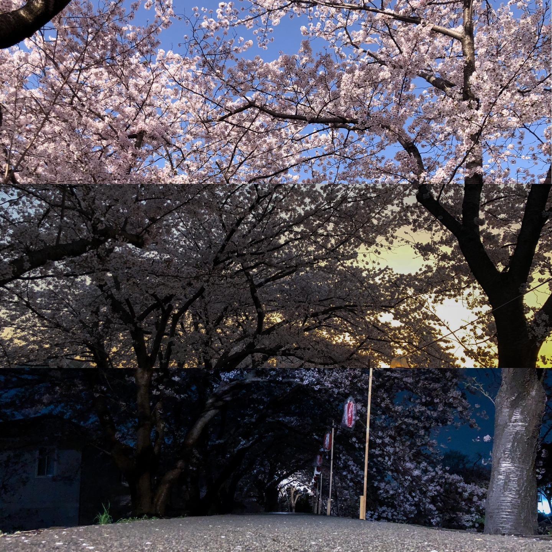 裏を流れる佐保川は隠れた桜の名所です。